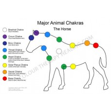 Chakras of the Horse Poster - PDF Download